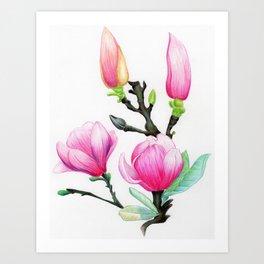 Botanical Illustration Magnolias Art Print