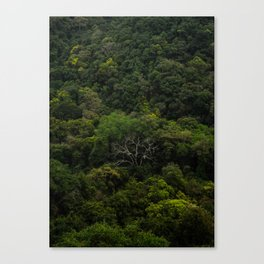 The tricky tree Canvas Print