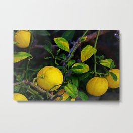 Winter Lemons Metal Print