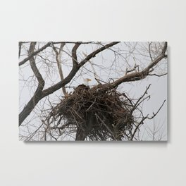Bald Eagle on a Nest Metal Print
