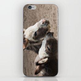 The donkeys iPhone Skin