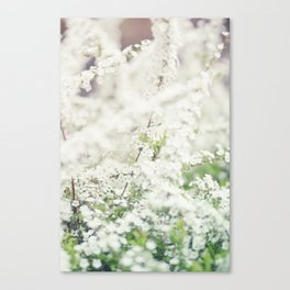 Spring is in the air  Canvas Print
