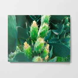 Close Up Of Blooming Green Cactus With Yellow Flowers Metal Print