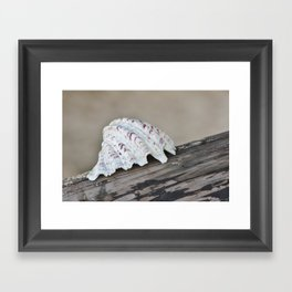 Ocean Shell  Framed Art Print