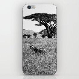 Impala in the grass iPhone Skin