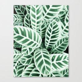 Wild leaf Canvas Print