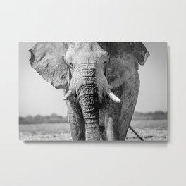 B&W Elephant 8 Metal Print