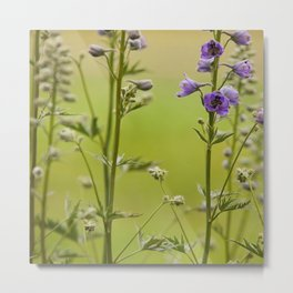 Purple Delphinium Flower Metal Print