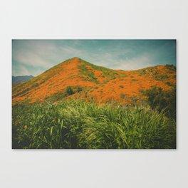 California Poppies 026 Canvas Print