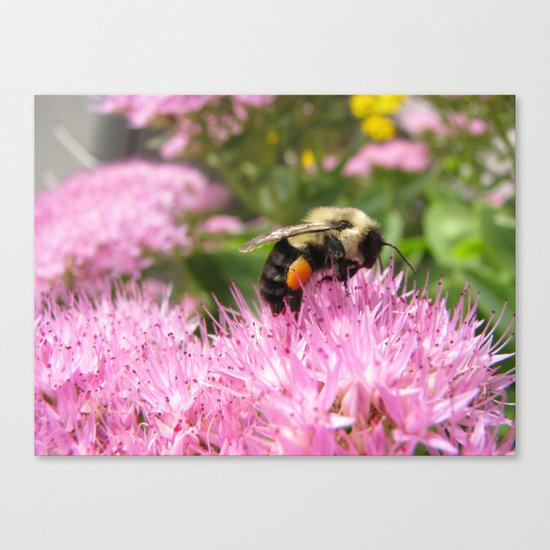 Let Me Bee Canvas Print