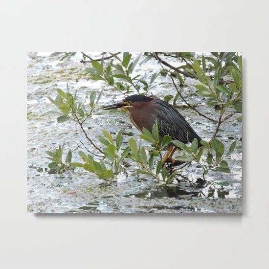 Green Heron at Lakeside Metal Print