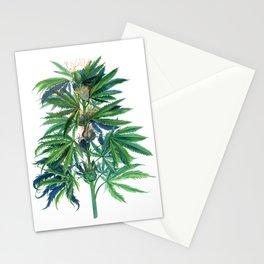 Cannabis Scientific Illustration Stationery Cards