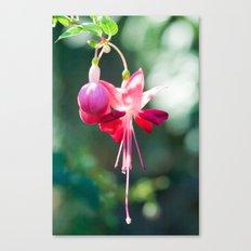 Fushia 54 Canvas Print