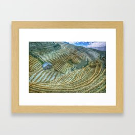 Rice Field Landscape Framed Art Print