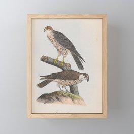 020 Lanner Falcon falco lanarius4 Framed Mini Art Print