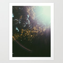 Light on Leaves Art Print