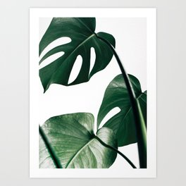 Monstera Leaf Print, Botanical Print, Botanical Art Art Print