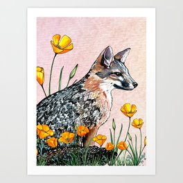 Channel Island Fox (Sunset Sky) Art Print