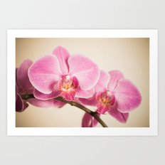 tender pink orchid Art Print