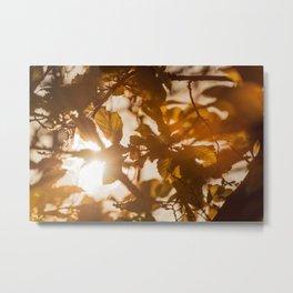 Sun shinning through gaps in the trees Metal Print