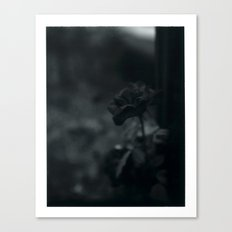 Colorless Beauty Canvas Print