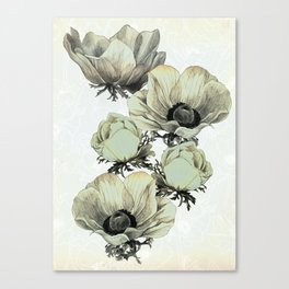 anemone flowers (white background) Canvas Print