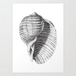 Seashell | Sea Shell | Conch Shell | Black and White | Art Print