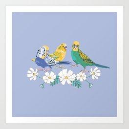 3 Little Birds, Budgies on Blue Art Print