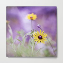 Purple Yellow Flower Photography, Purple Gold Green Nature Art Print, Daisy Floral Photo Metal Print