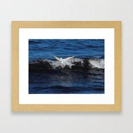 Black Headed Gull Donegal Framed Art Print