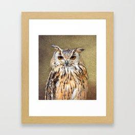 Indian Eagle Owl Framed Art Print