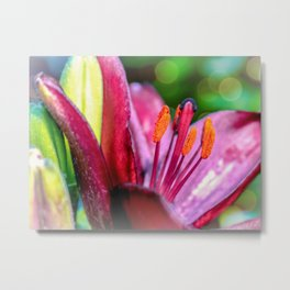 Blooming Tulip Metal Print