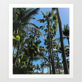 Bahamian Palms Art Print