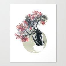 Milky weed Canvas Print