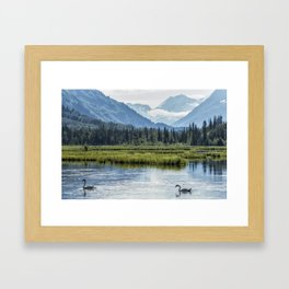 Swans on Tern Lake Framed Art Print