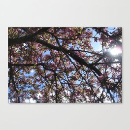 Spring Blossoms I Canvas Print