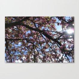 Spring Blossoms I Canvas Print
