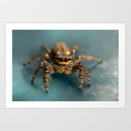 Small jumping spider Art Print