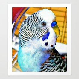 Blue Boy Budgie Bird Art Print