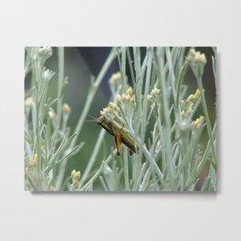 Grasshopper on sage Metal Print