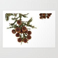 (Spruce or Fir) Cones Art Print