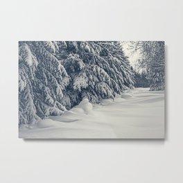 Beauty of Winter 17 Metal Print