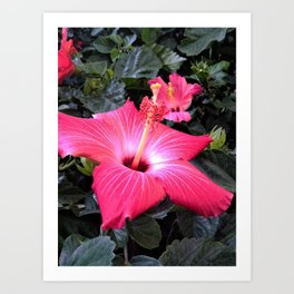 Hibiscus Life Art Print