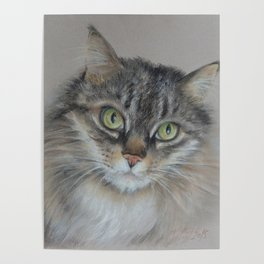 Tabby cat Maine Coon portrait Pastel drawing on the grey background Poster
