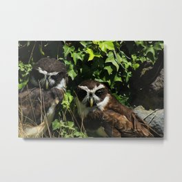 Two Spectacled Owls Metal Print