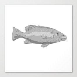 Schoolmaster Snapper Fish Drawing Canvas Print