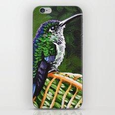 Many Spotted Hummingbird iPhone & iPod Skin