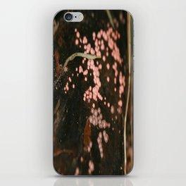 Lycogala epidendrum iPhone Skin