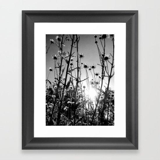Black and white Daisy garden 5 Framed Art Print