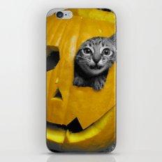 Halloween-Figgy Cat iPhone & iPod Skin